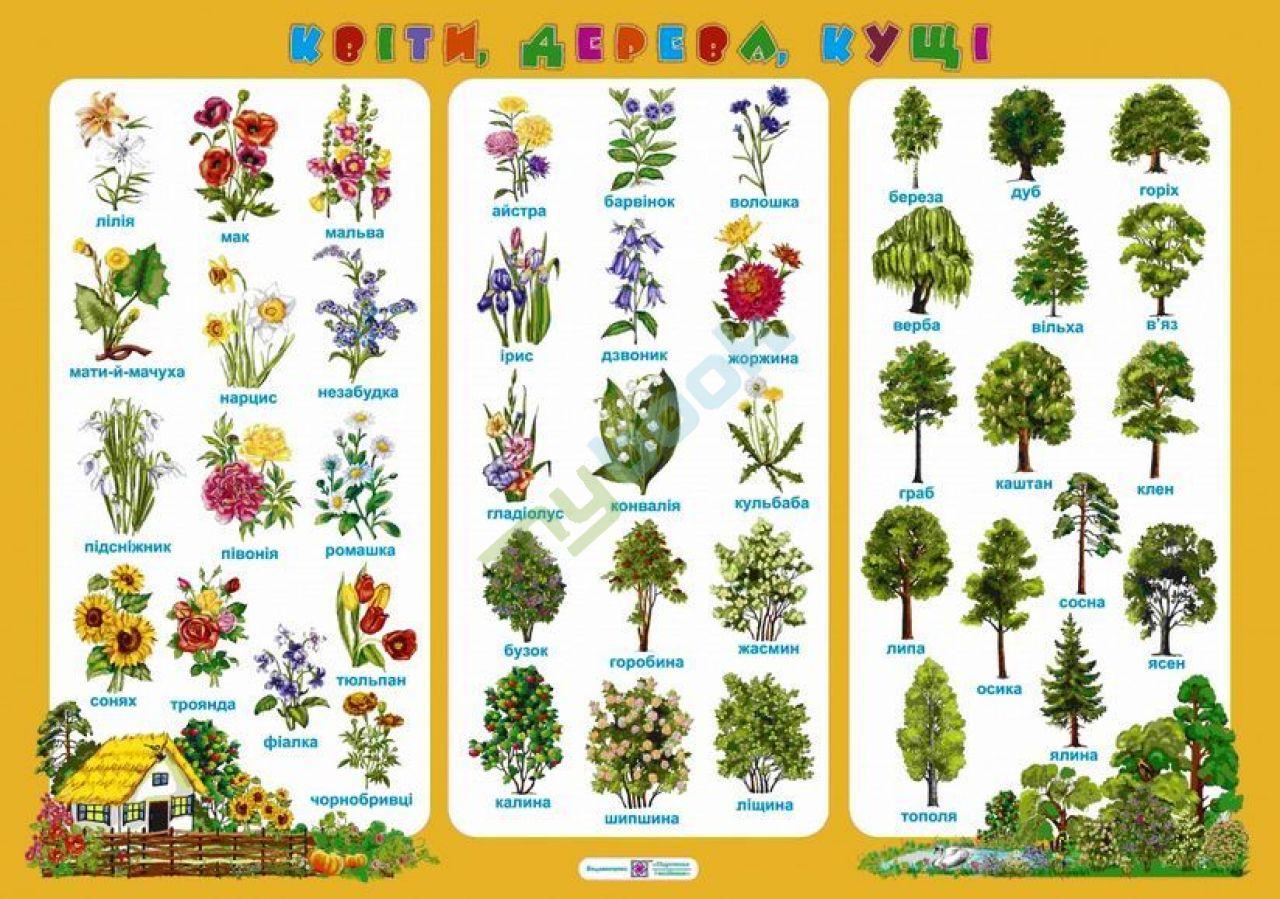 Купити книгу Плакат Квіти, дерева, кущі в Україні